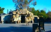 fotos de la montaña rusa Ghost Rider en el parque temático Knott's Berry Farm