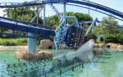 photos of Manta roller coaster in Sea World Orlando theme park